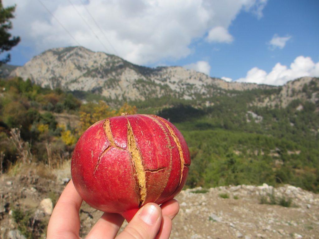 Чудесный фрукт)