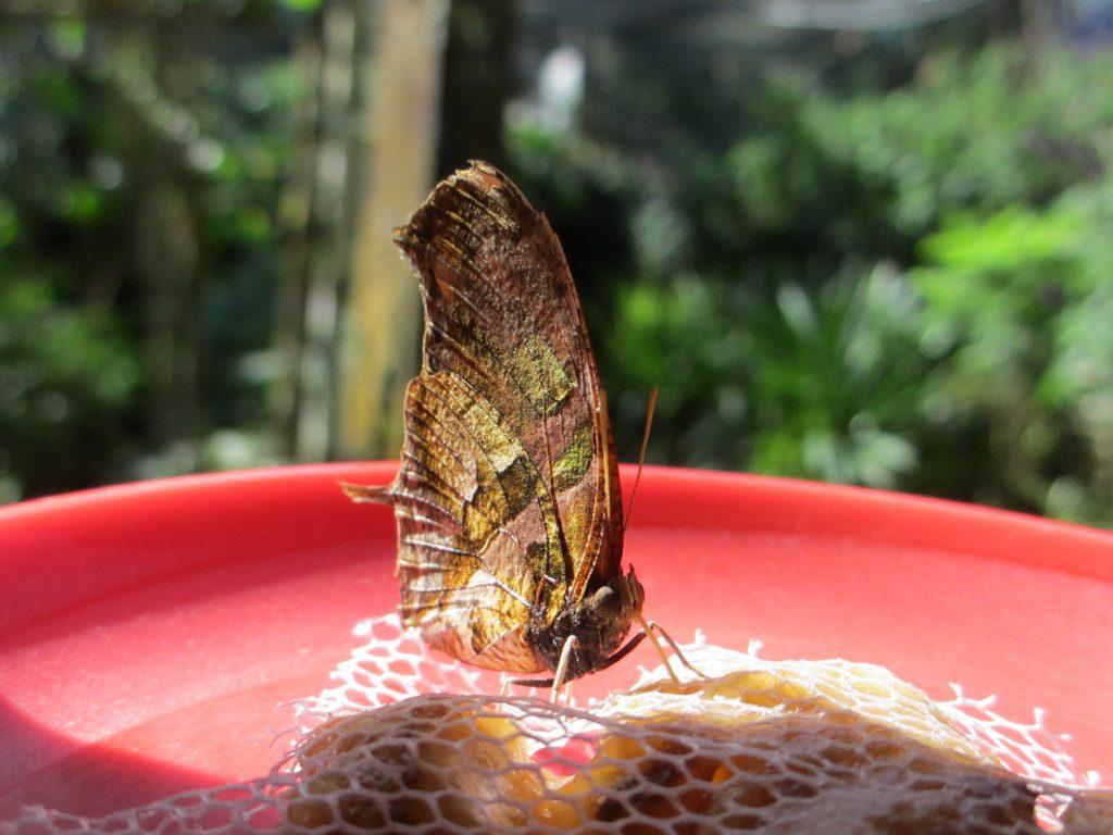 В парке бабочек)