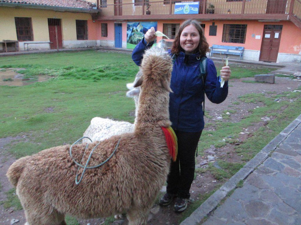 Самое большое счастье за все Перу - возможность покормить лам :)